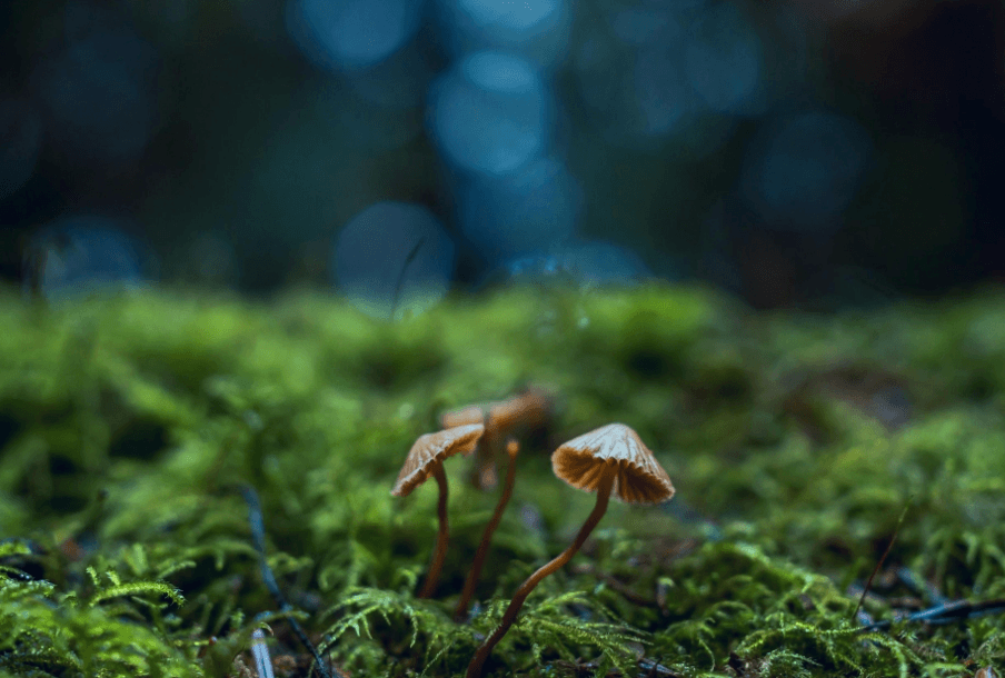magic mushrooms receives breakthrough status from the fda