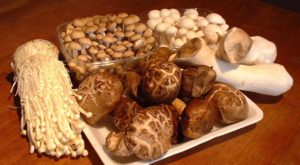 Different types of mushrooms including Oyster Mushrooms