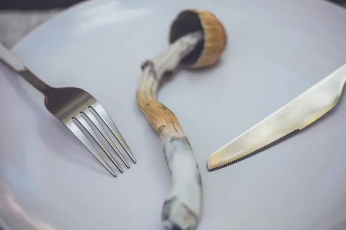mushroom top of the plate