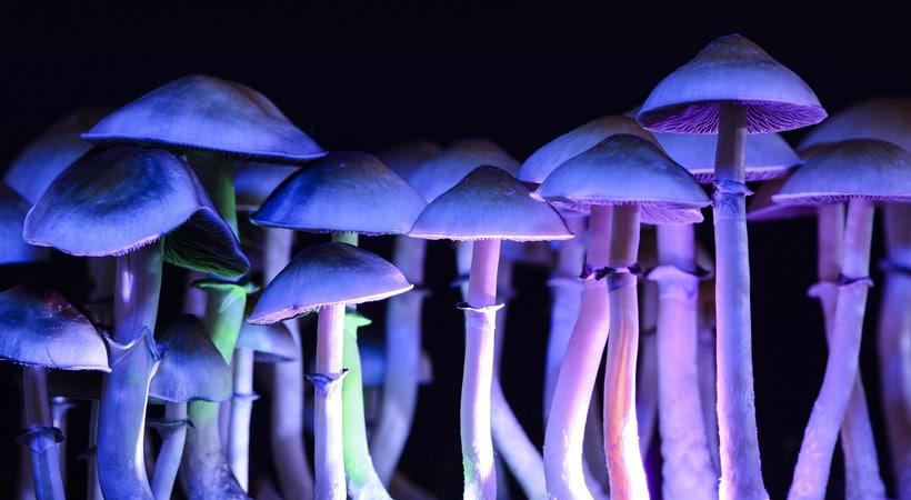 how to identify psilocybin mushrooms