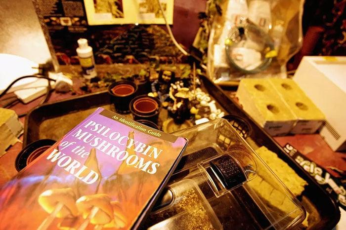 Dried mushrooms and the drug psilocybin mushrooms