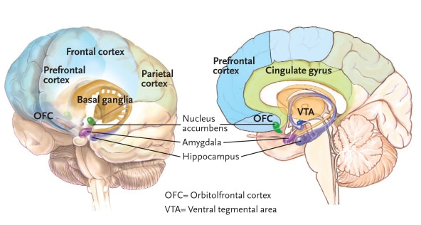 Major brain regions with roles in addiction