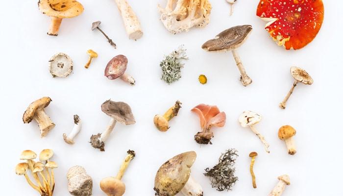Psilocybin is the active ingredient in magic mushrooms