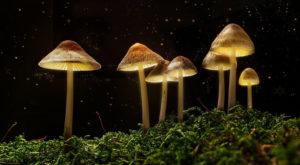 Fantasy magic mushrooms
