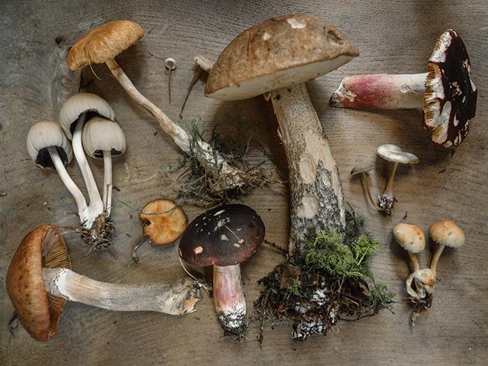 Even fresh mushrooms go bad