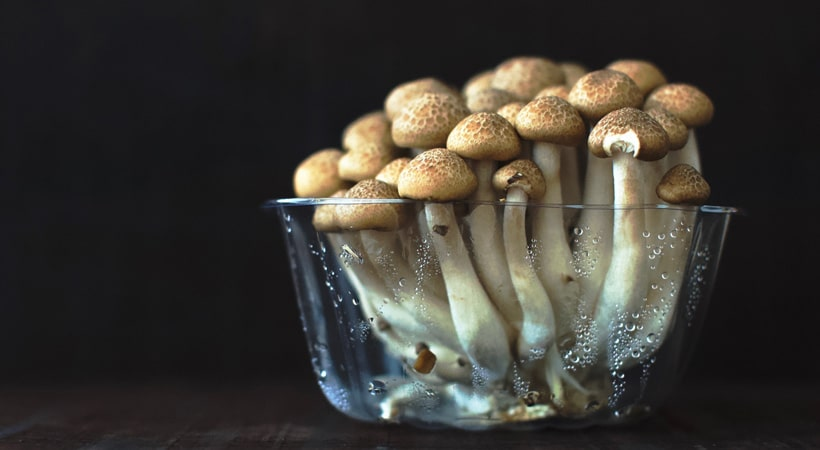clear glass cup filled with mushroom